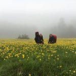 ılgaz-dağı-çiçekler