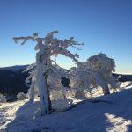 Ilgaz-dagı-boyundaki ağaç
